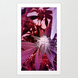 msdjwp106 Art Print
