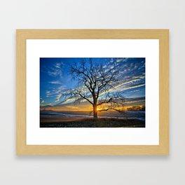 Sunburst Cottonwood Framed Art Print