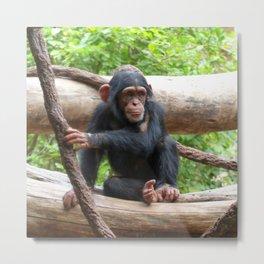 Chimpanzee_20150503_by_JAMFoto Metal Print