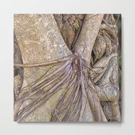 Strangler fig close up view Metal Print
