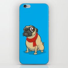 Pug with a scarf iPhone & iPod Skin