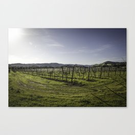In a Bowl Canvas Print