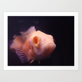 Kiss a Fish Art Print