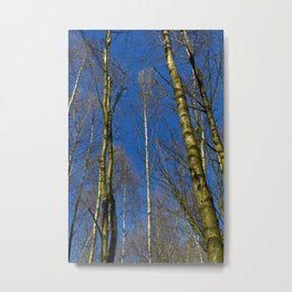 The Still forest Metal Print
