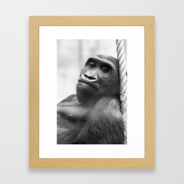 Wildlife Collection: Gorilla Framed Art Print