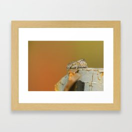 SPIDER DONT JUMP 2 Framed Art Print