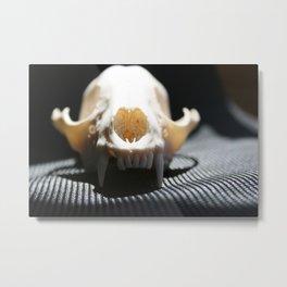 Raccoon Skull Metal Print