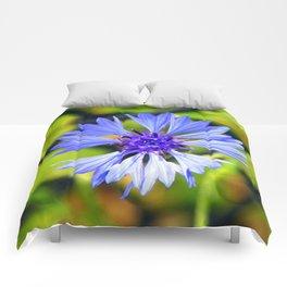 Freed Cornflower Comforters