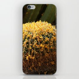 Barrel Cactus Covered In Butter Yellow Palo Brea Blossoms in Landscape iPhone Skin