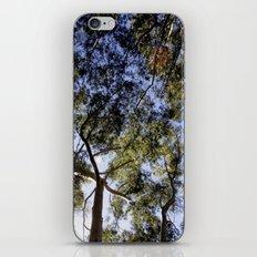 Eucalyptus Tree Canopy iPhone & iPod Skin