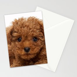 Little Brown Toy Poodle Stationery Cards