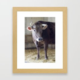 For the love of cows Framed Art Print