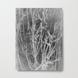 Beautiful frosty grass close front view Metal Print