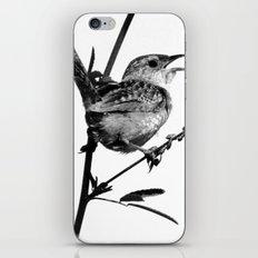 Sedge Wren iPhone & iPod Skin