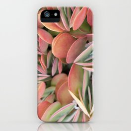 Succulents in Color iPhone Case