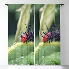 Danang Caterpillar Macro Close Up Blackout Curtain