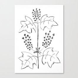 Herbarium Canvas Print