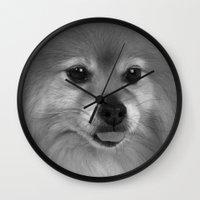 pomeranian Wall Clocks featuring Cute Pomeranian dog by Bruce Stanfield