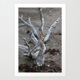 Moeraki Branches (1) Art Print