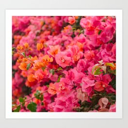 California Blooms VI Art Print
