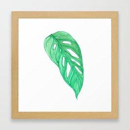 monstera obliqua single leaf Framed Art Print