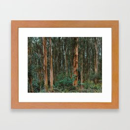 Eucalyptus Trees Near Berkeley California Framed Art Print