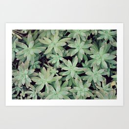 Succulent Abstract Art Print