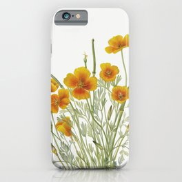 Mexican Poppy (Eschscholtzia mexicana) (1927) by Mary Vaux Walcott iPhone Case