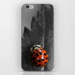 Grey Ladybug iPhone Skin