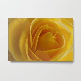 Yellow Rose of California Metal Print
