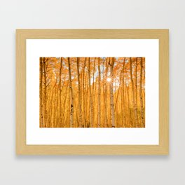 ASPENS OF AUTUMN PHOTO - COLORADO FALL IMAGE - SUN & TREES NATURE PICTURE - LANDSCAPE PHOTOGRAPHY Framed Art Print