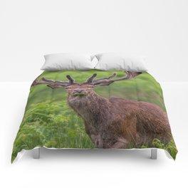 Proud Stag Comforters