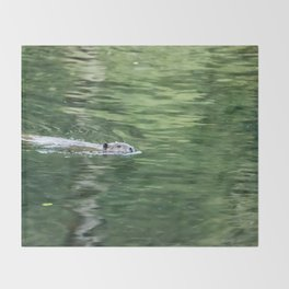 Beaver on an Evening Swim Throw Blanket