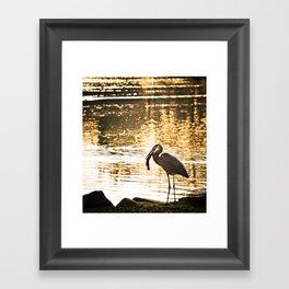 Great Blue Heron (Eats A Fish) Framed Art Print