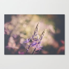Purple Lupine Canvas Print