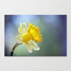 Daffodil 9909  Canvas Print