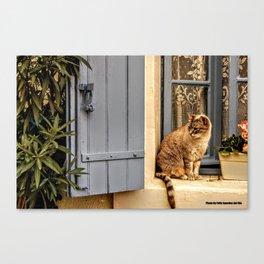 Le petit chat Canvas Print