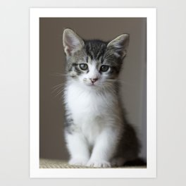 Jack - Kitten Portrait #2 (2016) Art Print