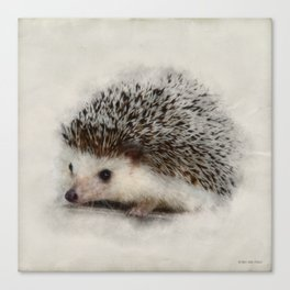 Little hedgehog Canvas Print