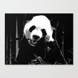Cute Giant Panda Bear with tasty Bamboo Leaves Canvas Print