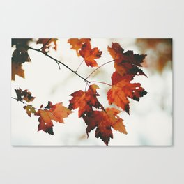 Fall colors in Canada Canvas Print