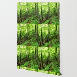 Forest 6 Wallpaper