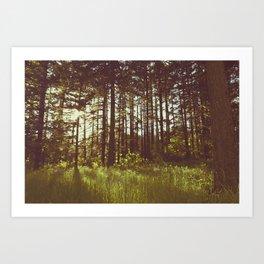 Summer Forest Sunlight - Nature Photography Art Print