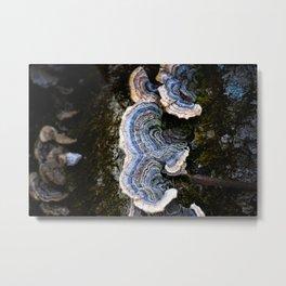 Bracket Fungus in Blue Metal Print