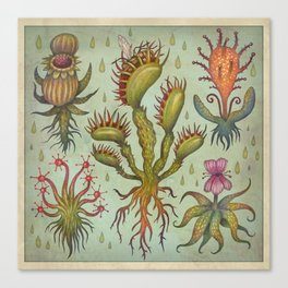 Carnivorous plants Canvas Print