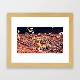 Butterfly park Framed Art Print