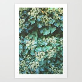 Sea of Ivy Art Print