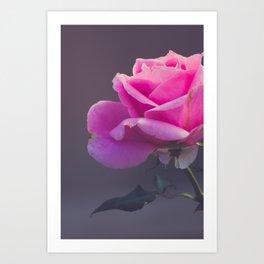 Pink Rose I Art Print