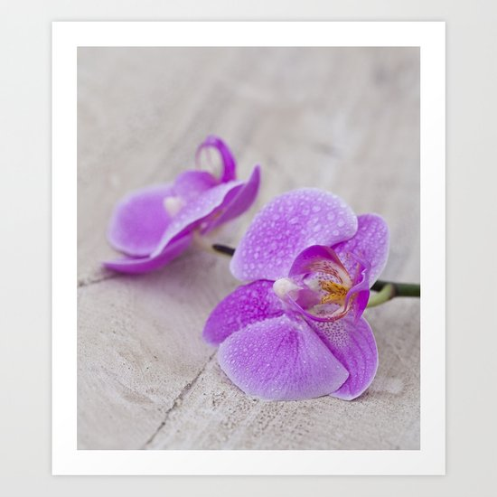 pink orchid flower close up water drops Art Print