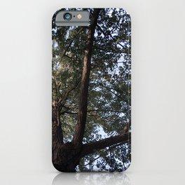Ginkgo Biloba Tree iPhone Case